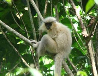 Golden Langur is restricted to Bhutan and we find it near Zhemgang